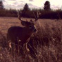 Manitoba Bruiser caught on trail camera