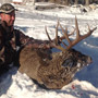 Dewey Buck - Manitoba Whitetail